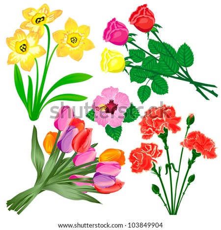 Set of five kinds of flowers. Vector illustration - stock vector