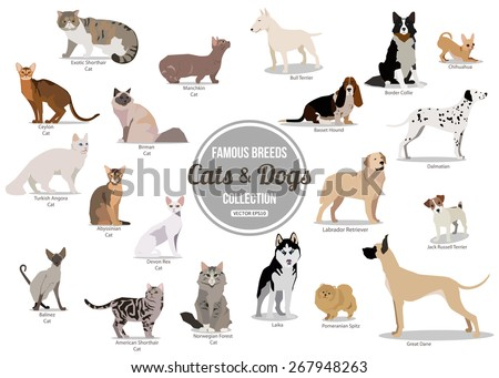 Set of flat sitting or walking cute cartoon dogs and dogs. Popular breeds. Flat style design isolated icons. Vector illustration.