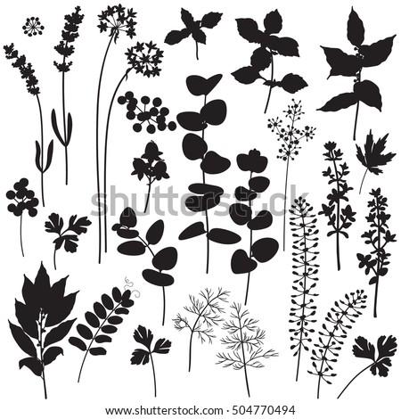 Wildflower Silhouette | www.pixshark.com - Images ...
