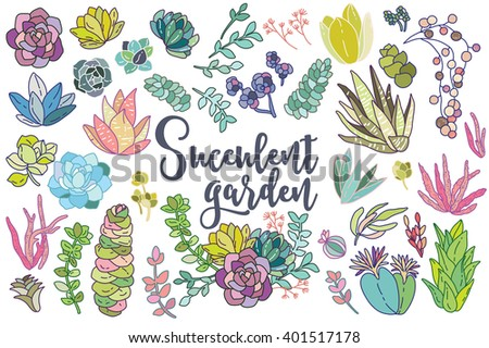Set of floral succulent elements for your compositions - stock vector
