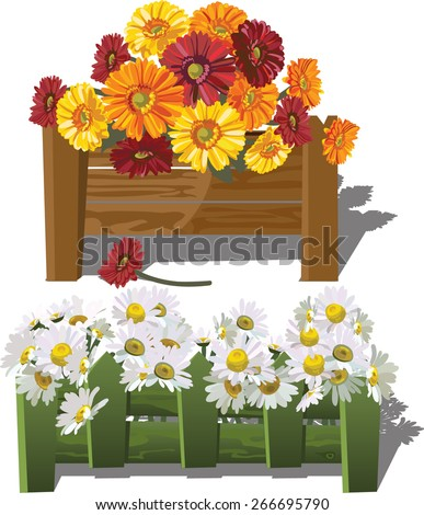 set of flower beds with daisies and red and yellow gerberas - stock vector