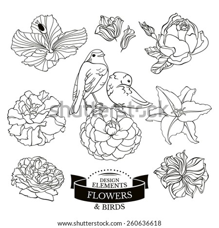 Set of flowers and birds vector illustration - stock vector
