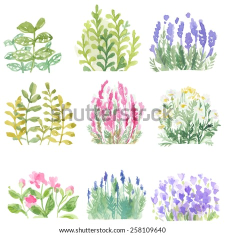 Set of flowers painted in watercolor on paper. Vector. Coloured bright colors. horticulture - stock vector