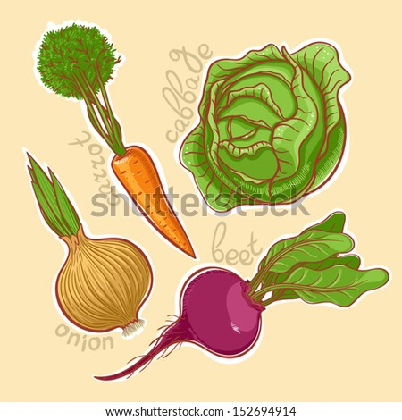 Set of four different vegetables: beets, onions, carrots, cabbage  - stock vector