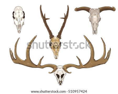 Set of four skulls of animals, male and female deer, buffalo and deer cave. Big horns. Suitable for tattoo vector design element.