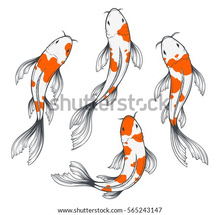 Colorful koi fish drawings images for Types of koi fish and meanings