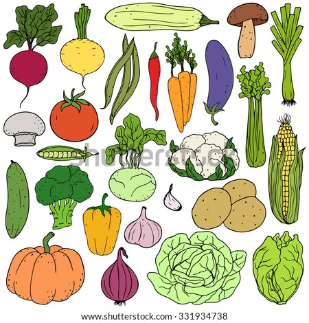 Set of fresh healthy hand-drawing colorful vegetables isolated on white background. Flat design. Organic farm illustration. Healthy lifestyle vector design elements.