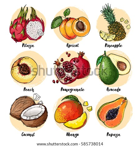 Set of fruits drawn a line on a white background. Vector sketch. Sketch line. Pitaya, apricot, pineapple, peach, pomegranate, avocado, coconut, mango, papaya