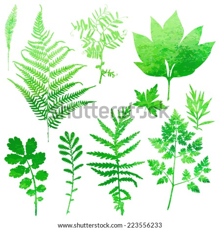 Set of garden watercolor leaves. Vector illustration.