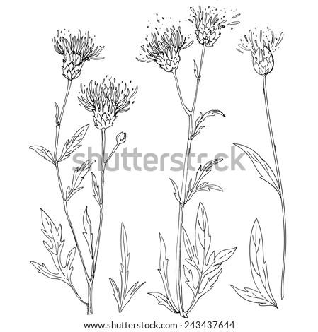 Set of grass narisovyh black line, summer grass. Thistle. Verctor graphics, black line on a white background - stock vector