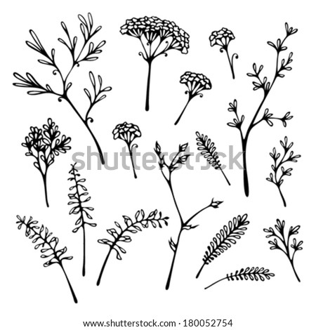 Set of grass silhouettes isolated on white background. Various hand-drawn grass and floral elements for your design. - stock vector