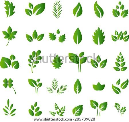 Set of green leaves design elements for you design - stock vector