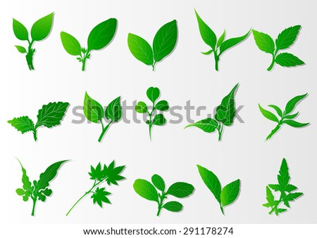 Set of green leaves design elements.This image is a vector,Tropical leaves collection in Eco concept.