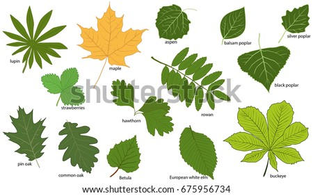 Buckeye Stock Images Royalty Free Images Vectors