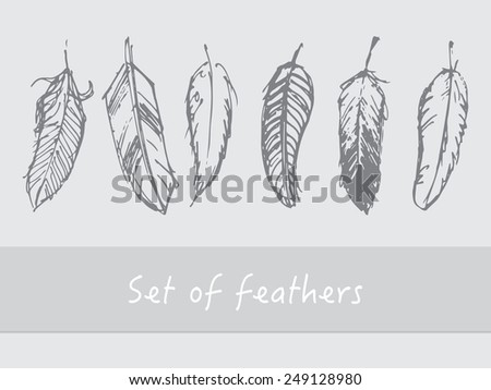 Set of grey feathers on light grey background
