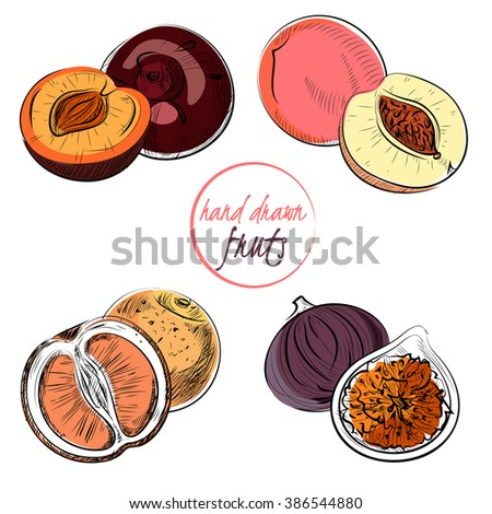 Set of hand-draw fruits. Vector.