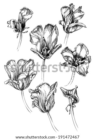 Set of hand drawing tulips
