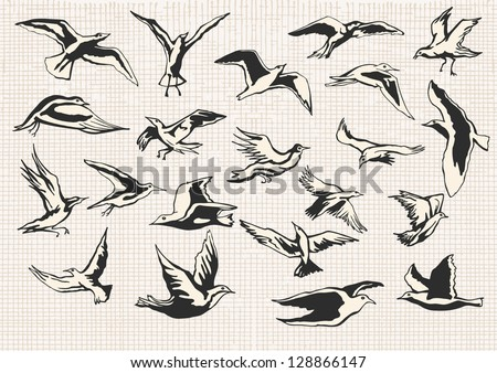 Set of Hand Drawn Birds illustration