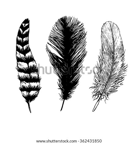 Set of hand drawn black and white feathers. Vector.