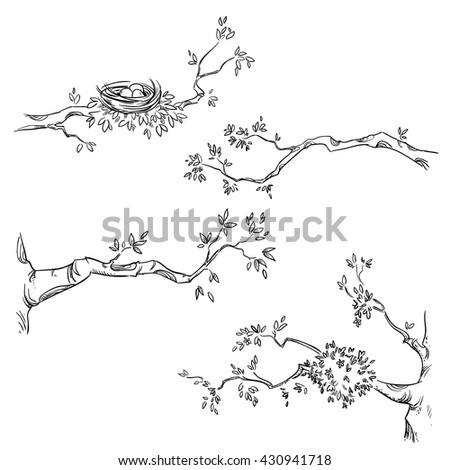 Set of hand drawn branches, vector illustration - stock vector