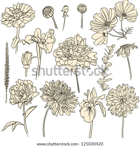 Set of hand drawn flowers. - stock vector