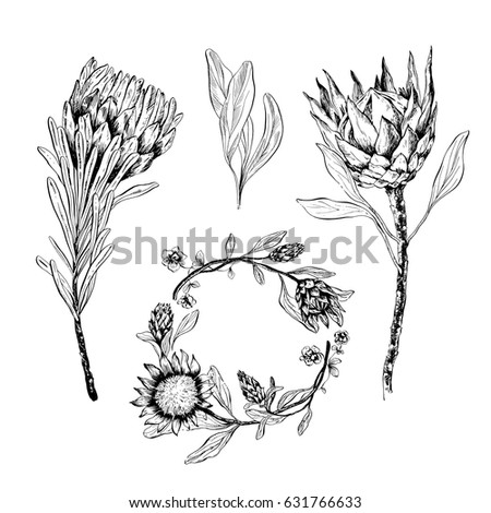 Protea Stock Images Royalty Free Images amp Vectors