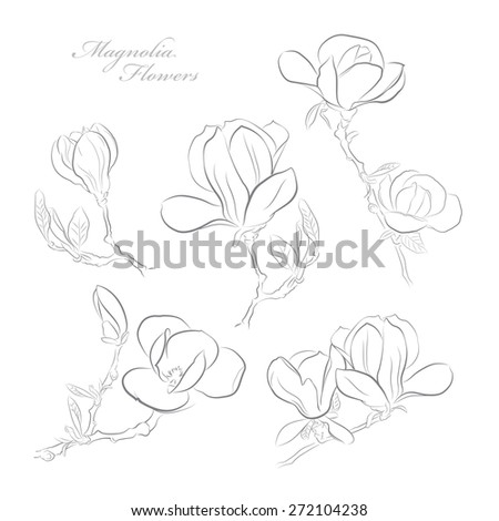 Set of hand-drawn magnolia flowers