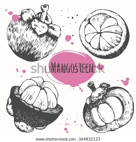 Set of hand drawn mangosteen tropical fruit. Fresh organic food. Vector illustration with sketch. Black and white.