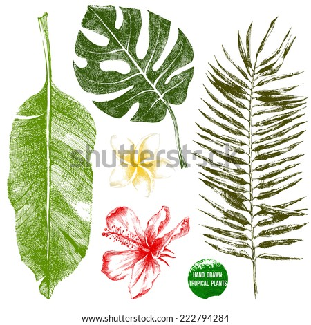 Set of hand drawn tropical leaves and flowers in color - stock vector