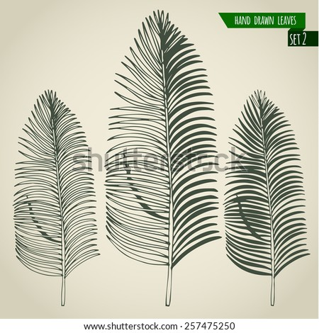 Set of hand drawn tropical palm leaves. Vector illustration. - stock vector
