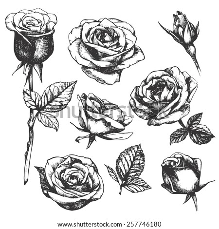 Rose Drawing Stock Images Royalty Free Images Vectors