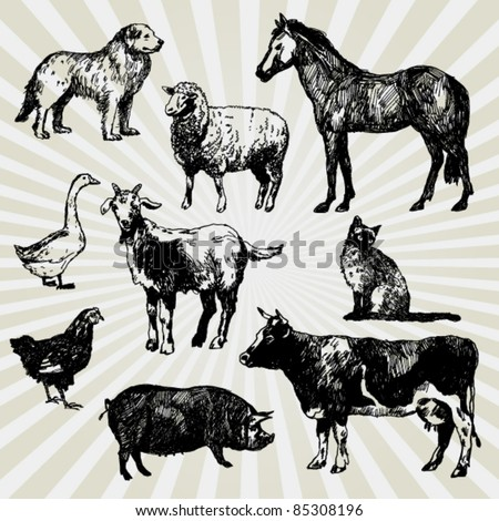 Set of Home Animals Hand Drawn - stock vector