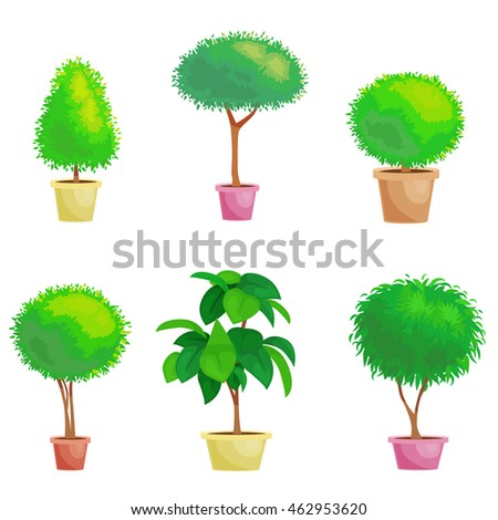 set of house plant and office plants in pot - Office Plants
