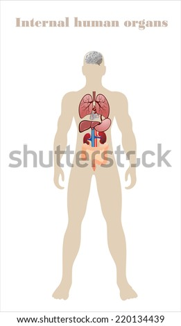 Set human anatomy partsbrain liver heart stock vector 220134439 set of human anatomy partsbrain liver heart kidney lung ccuart Gallery