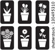 Set of icon of flowers in pots - stock vector