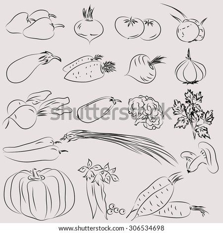 Set of illustrations of vegetables in the sketch - style. Monochrome.