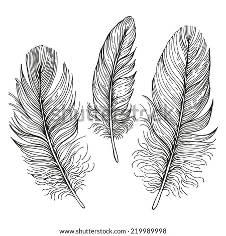 Set of illustrations with feathers. - stock vector