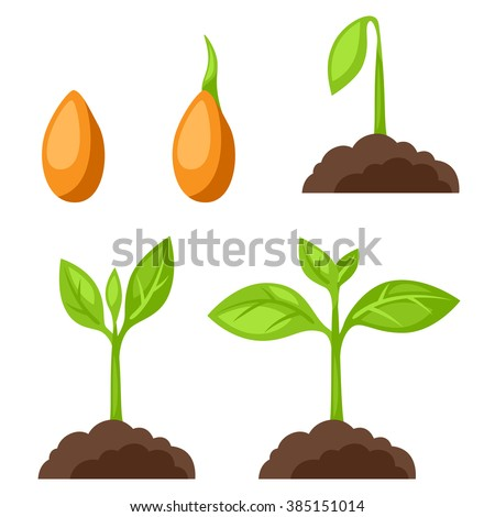 Set of illustrations with phases plant growth. Image for banners, web sites, designs. - stock vector
