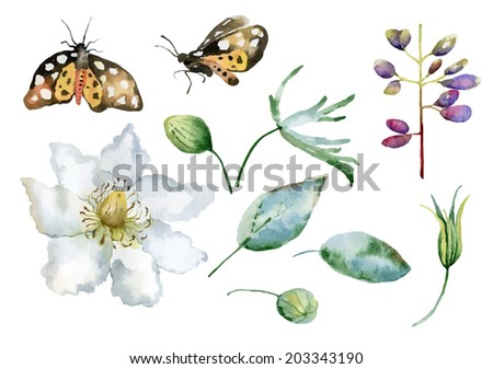 Set of isolated elements of  flowers, leaves and butterflies. Vector illustration - stock vector