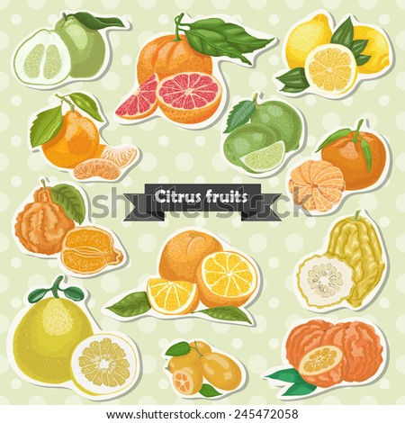 Set of isolated label citrus fruits. Vector illustration for your design - stock vector