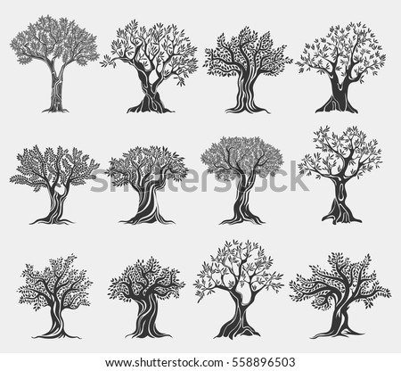 Set Isolated Olive Trees Icons Ancient Stock Vector ...