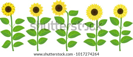 set of isolated sunflowers