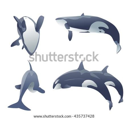 set of killer whales jumping on white. vector illustration - stock vector