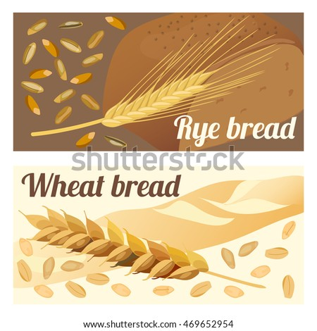 Set of labels rye and wheat bread. Ears and grains. Vector illustration.
