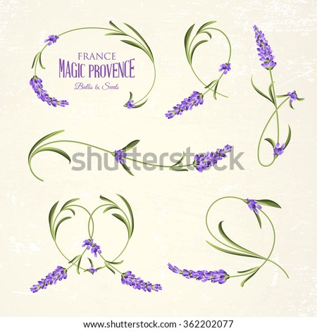 Set of lavender flowers elements. Botanical illustration. Collection of lavender flowers on a white background. Lavender hand drawn. Lavender flowers isolated on white background.