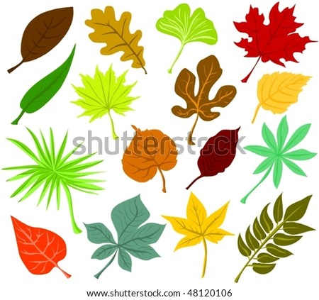 Set of leaf icons - stock vector