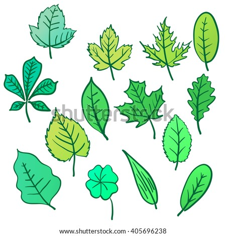Set of leafs isolated for design on a white background. Vector set, hand drawn illustration.
