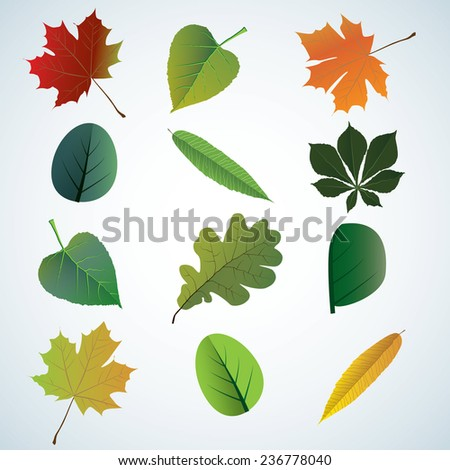 Set of leaves from different trees. Editable vector illustration - stock vector