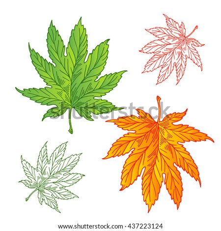 Set of leaves in all seasons, filled with leaves for the summer and fall, a stroke and sketch style. - stock vector