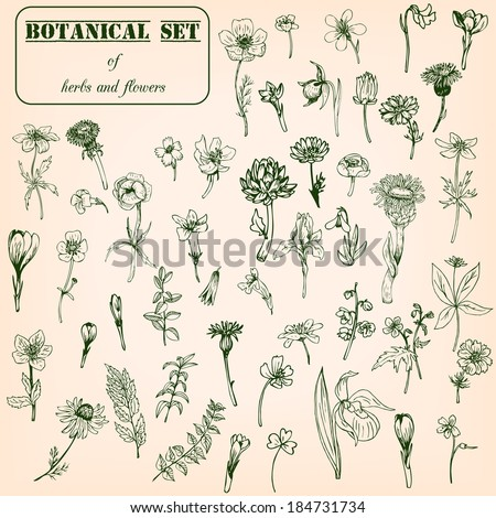 Set of line drawing herbs and flowers, vector illustration - stock vector